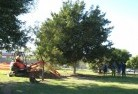 Bardwell Park Tree lopping 15